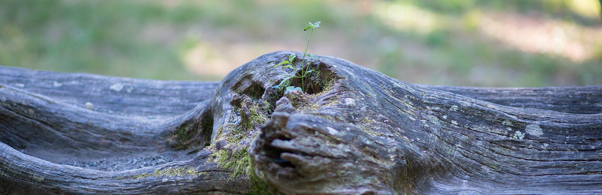 185bibos-bienestar-y-bosques-pivalbuena